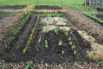 Spring Garden Update | myhumblekitchen.com