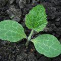 In the Garden | myhumblekitchen.com