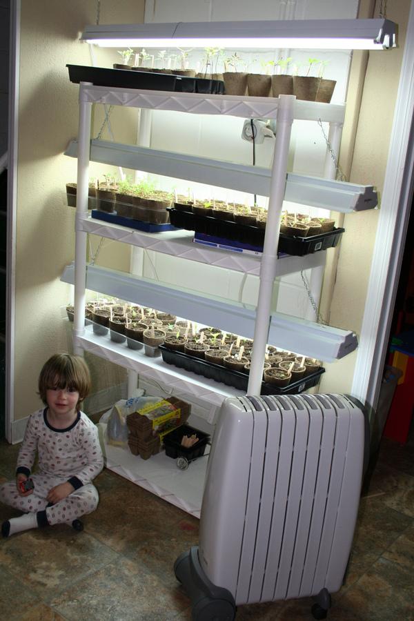 growing seeds under supplemental lighting my humble kitchen. Black Bedroom Furniture Sets. Home Design Ideas
