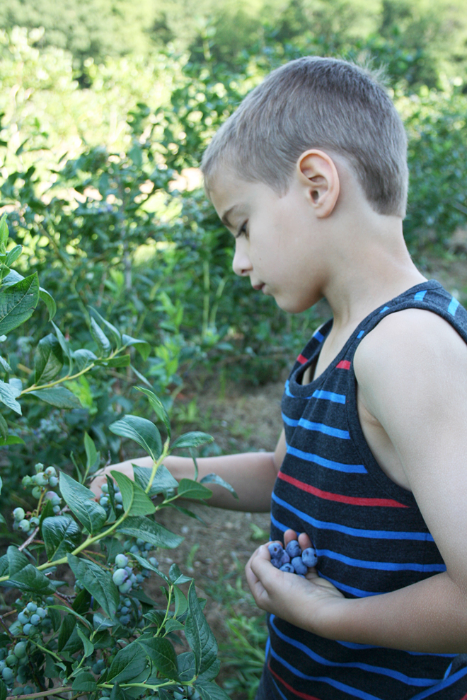 5 Life Lessons Your Family Can Learn at a U-Pick Farm (Bonus Cherry Vanilla Jam Recipe)