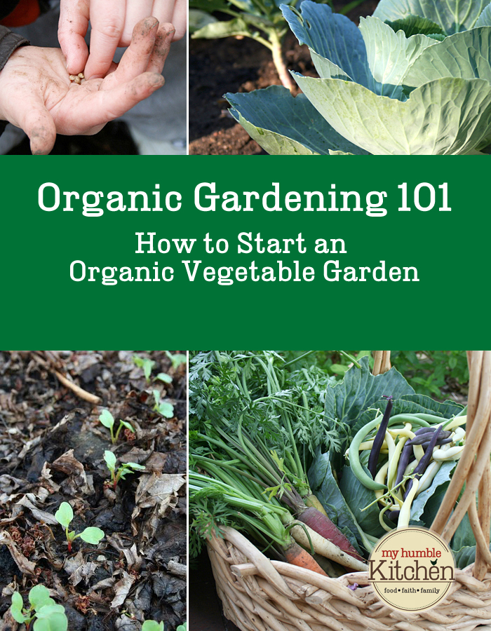 Organic Vegetable Gardening 101: How To Start an Organic Vegetable Garden