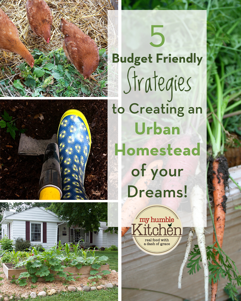 5 Budget Friendly Strategies To Creating an Urban Homestead of Your Dreams! | myhumblekitchen.com